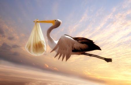 la cicogna che porta il bebé in un sacco che vola in cielo