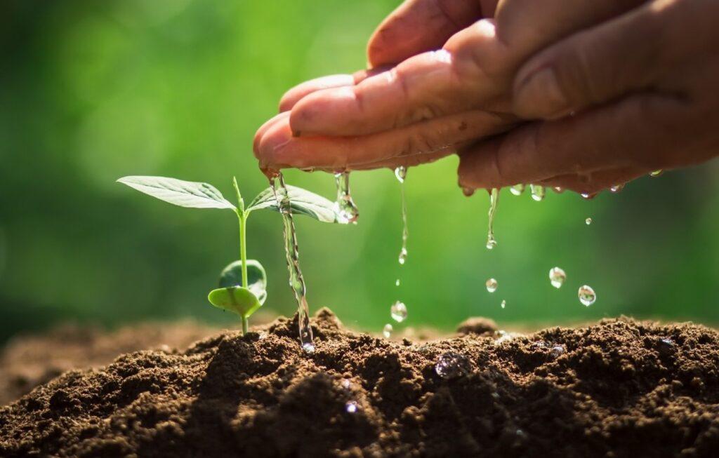 due mani bagnano una piccola pianta appena nata nel terreno